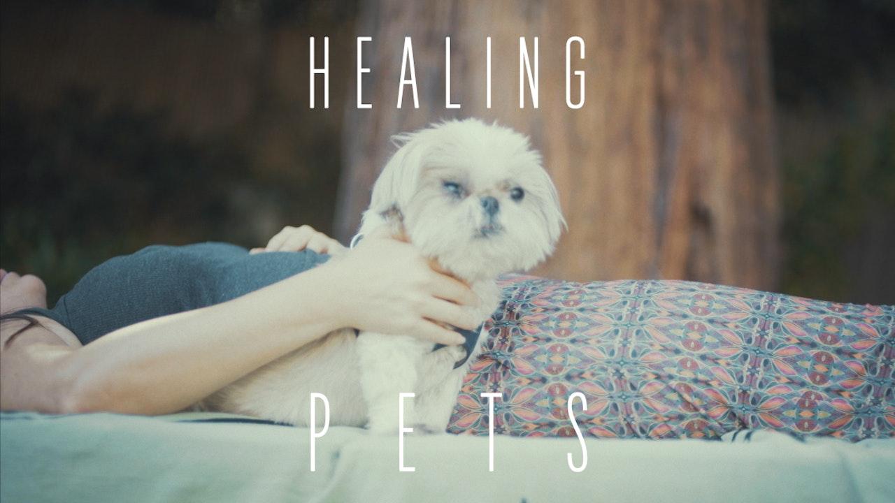 Healing Pets