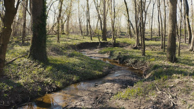 Slow Moments: Blatchley Nature Preserve
