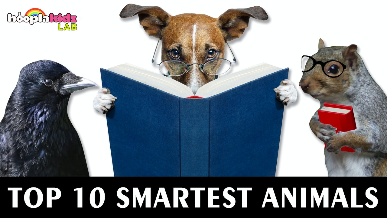 Top 10 Smartest Animals