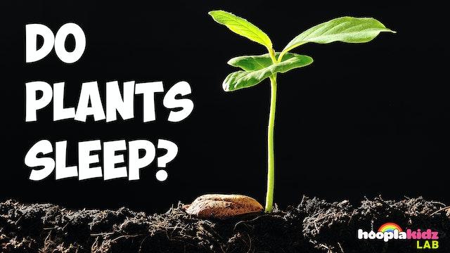 Do Plants Sleep?