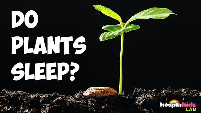 Do Plants Sleep?