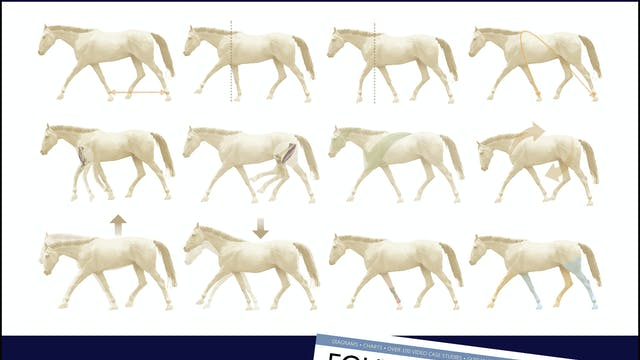 How to Recognize Lameness in Horses