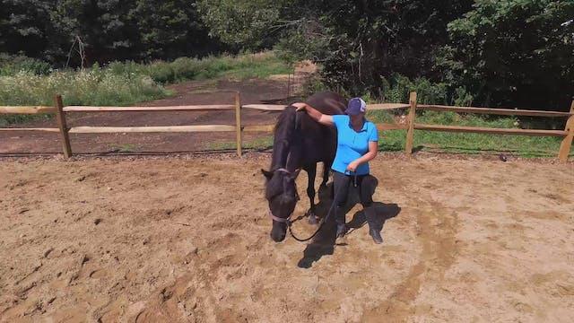 Horse Speak-First Conversations