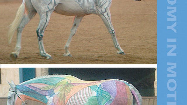 Anatomy In Motion 1 - The Visible Horse