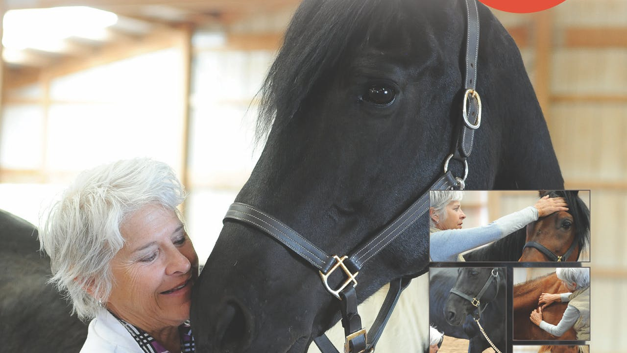 Is Your Horse 100 Percent?
