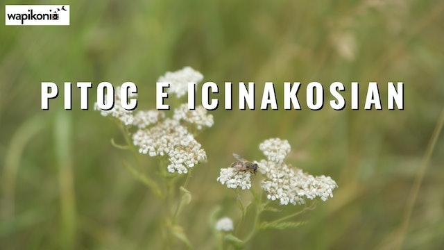 Pitoc E Icinakosian