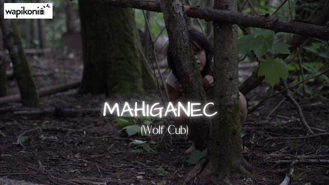 Mahiganiec (Wolf Cub)