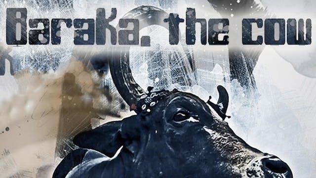 Baraka, The Cow