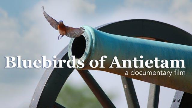 Bluebirds of Antietam