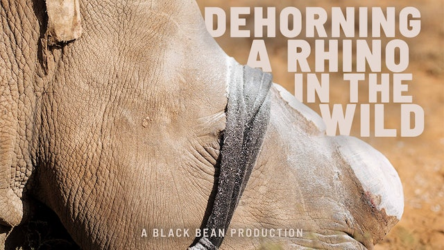 Empowers Africa Conservation Trip - Dehorning a Rhino in the Wild