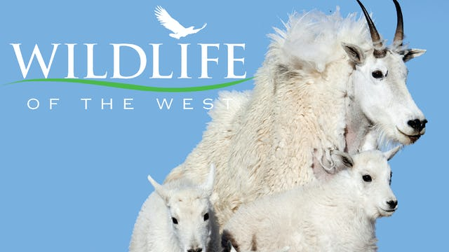 Wildlife of the West