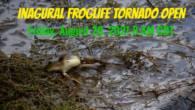 2021 Frog Life Tornado Open Trailer