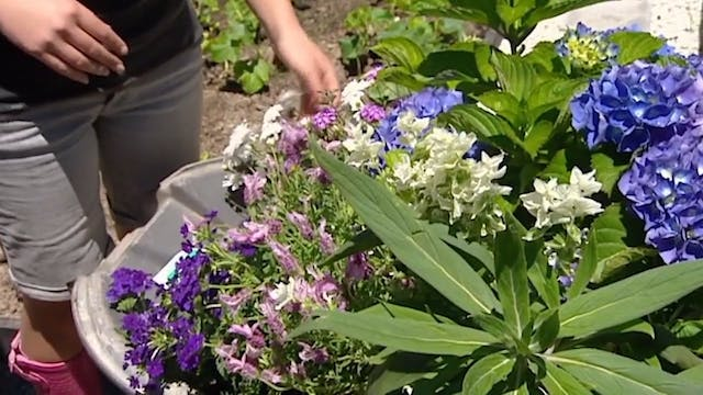 How to Lure Beneficial Insects Into Y...