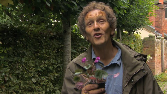 Gardeners' World - Lime Walk