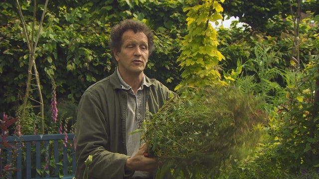 Gardeners' World | East Lambrook Manor