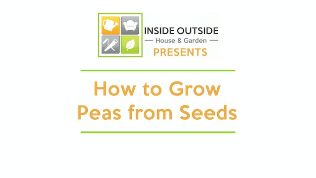 How to Grow Peas from Seeds