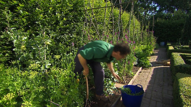 Gardeners' World - Siberian Wallflower