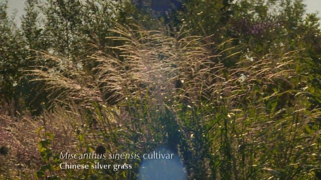 Gardeners' World | RHS Rosemoor