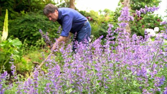 Love Your Garden | The Flower Garden