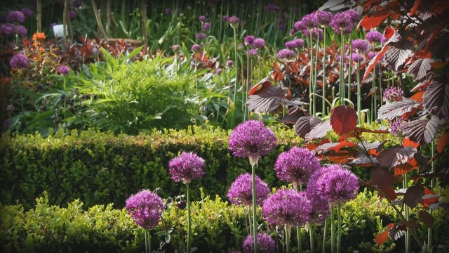 Gardeners' World | Mount Edgcumbe
