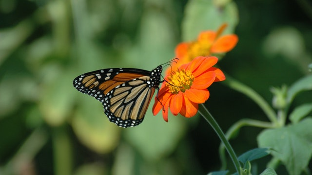 Gardening for Butterflies & Other Beneficial Insects