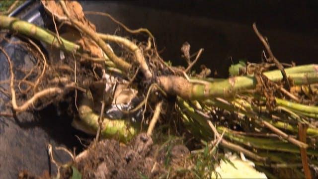 Get Growing - Herbs, Bird Nets & Compost