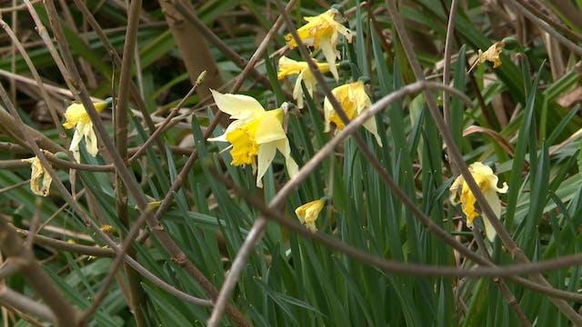 Garden Rescue   West Sussex