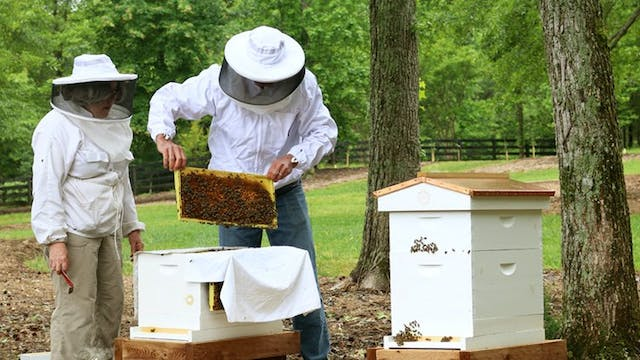 A Year in the Life of a Beginning Bee...