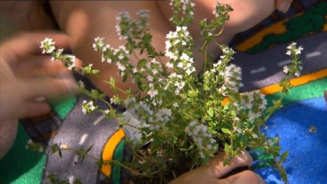 Get Growing - Flowers, Pickles & Pesto