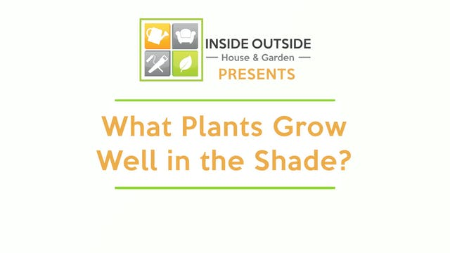 What Plants Grow Well in the Shade?