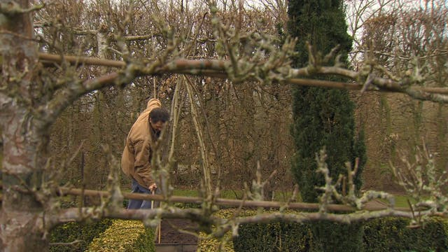 Gardeners' World - Bean Stick