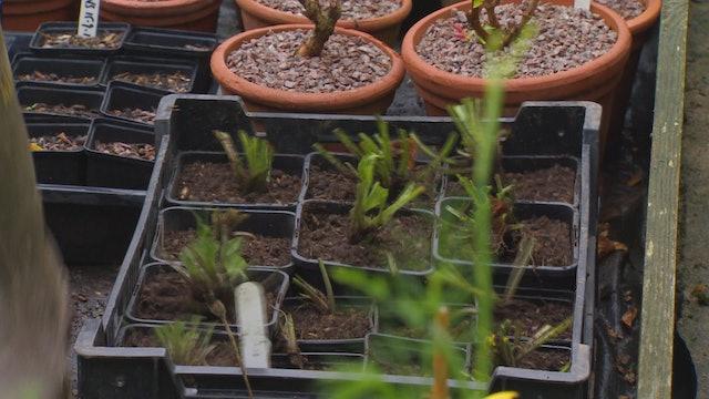 Gardeners' World - Cyclamen