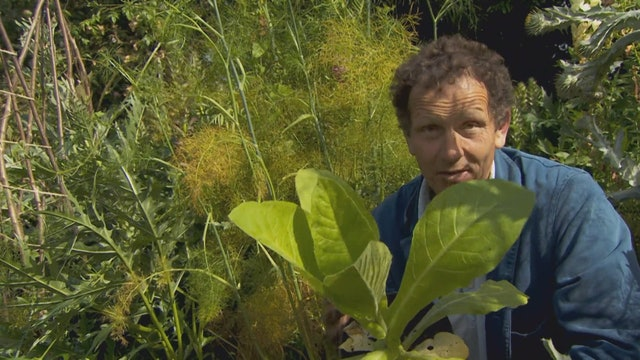 Gardeners' World | The Phoenix Garden
