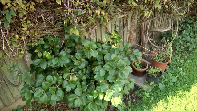Garden Rescue | Watford