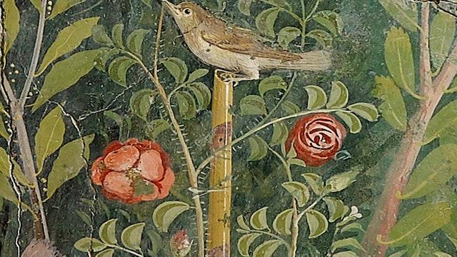 Gardeners' World - The Pilgrim Rose