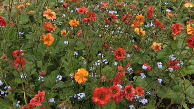 Gardeners' World - Plant Feed