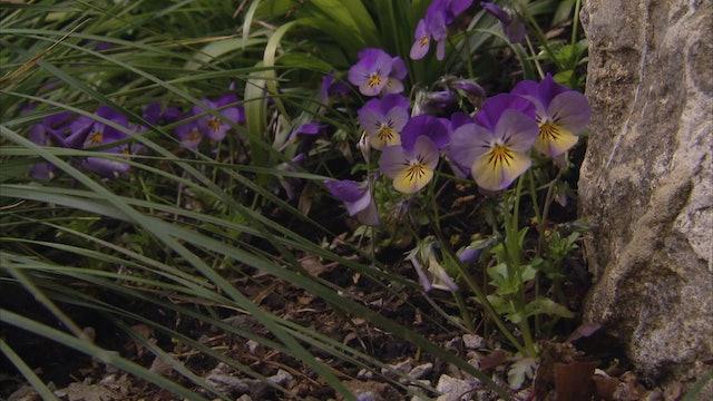 Gardeners' World - Garden Designers