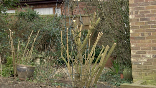 Garden Rescue | Norwich