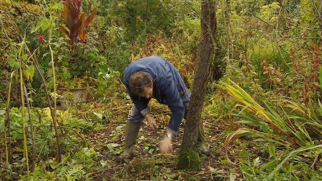 Gardeners' World - Weeping Pear