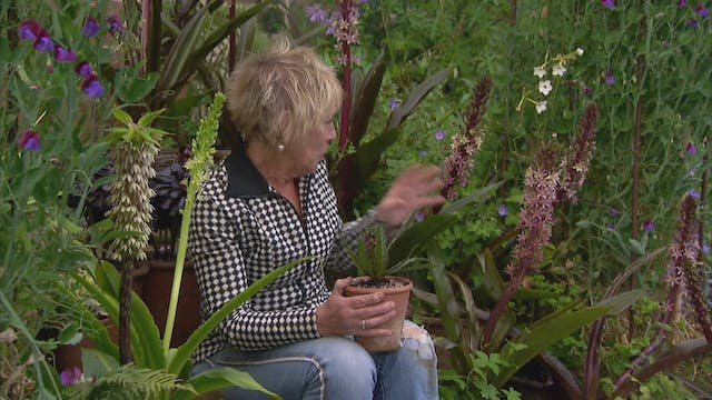 Gardeners' World | Mount Stewart
