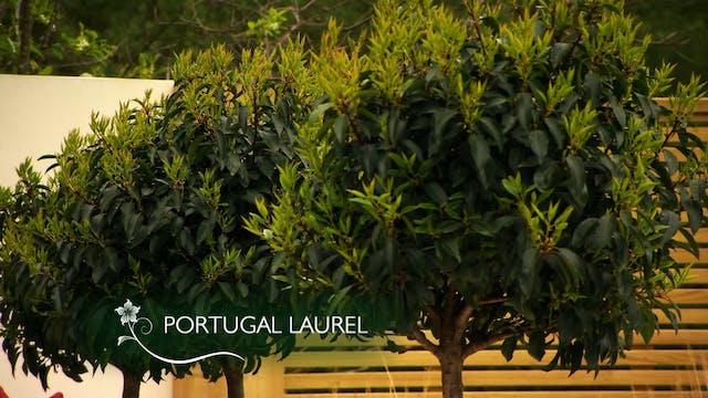 Love Your Garden | The Seasonal Garden