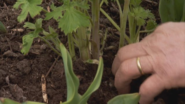 Gardeners' World | Southern Ireland