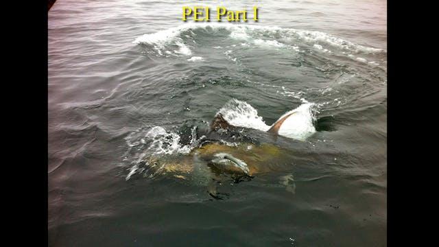 1000 Pound Bluefin from Prince Edward Island Part 1 TRT 22:00