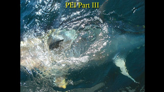 PEI Part III  TRT  22:00