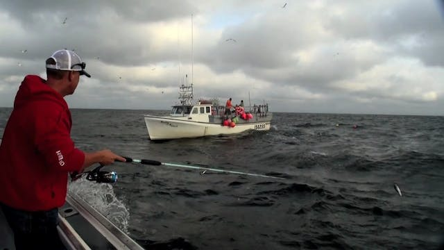 Prince Edward Island 1000 Pound Bluefin Part 4