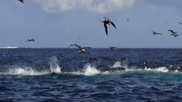 Islas Secas Panama Pt. 1