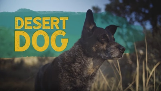 Ace and the Desert Dog