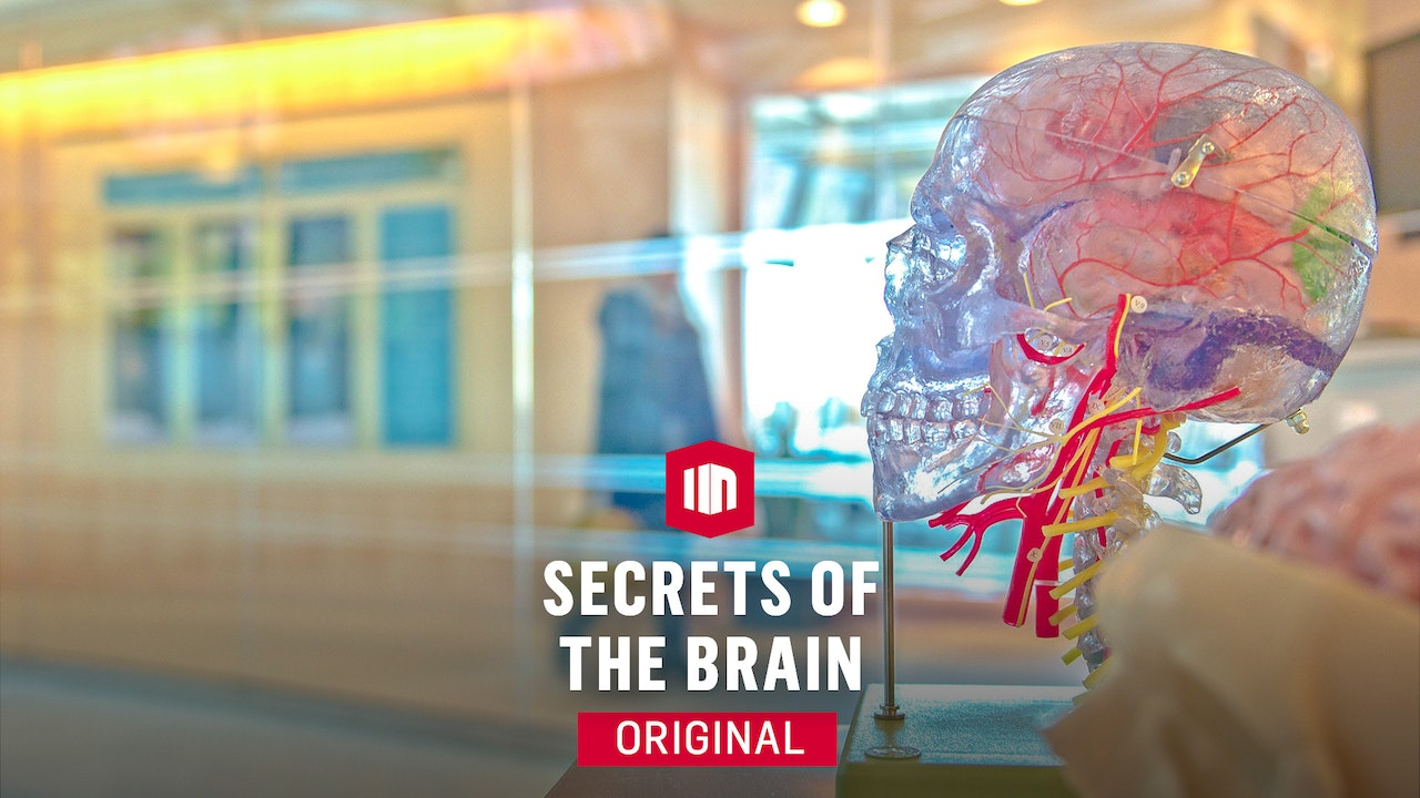 Secrets Of The Brain