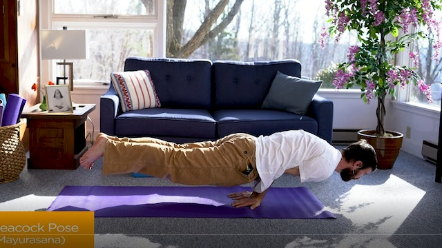 Hatha Yoga Tips: Peacock Pose with Zac Parker