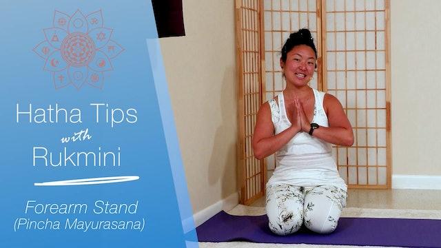 Hatha Yoga Tips: Forearm Stand with Rukmini Ando